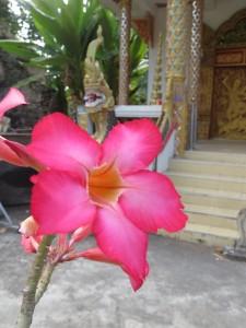 Blume Chiang Mai