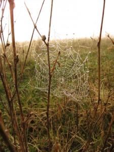 Uckermark Spinnennetz