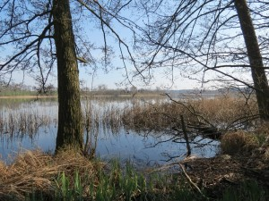 Uckermark Sabinensee